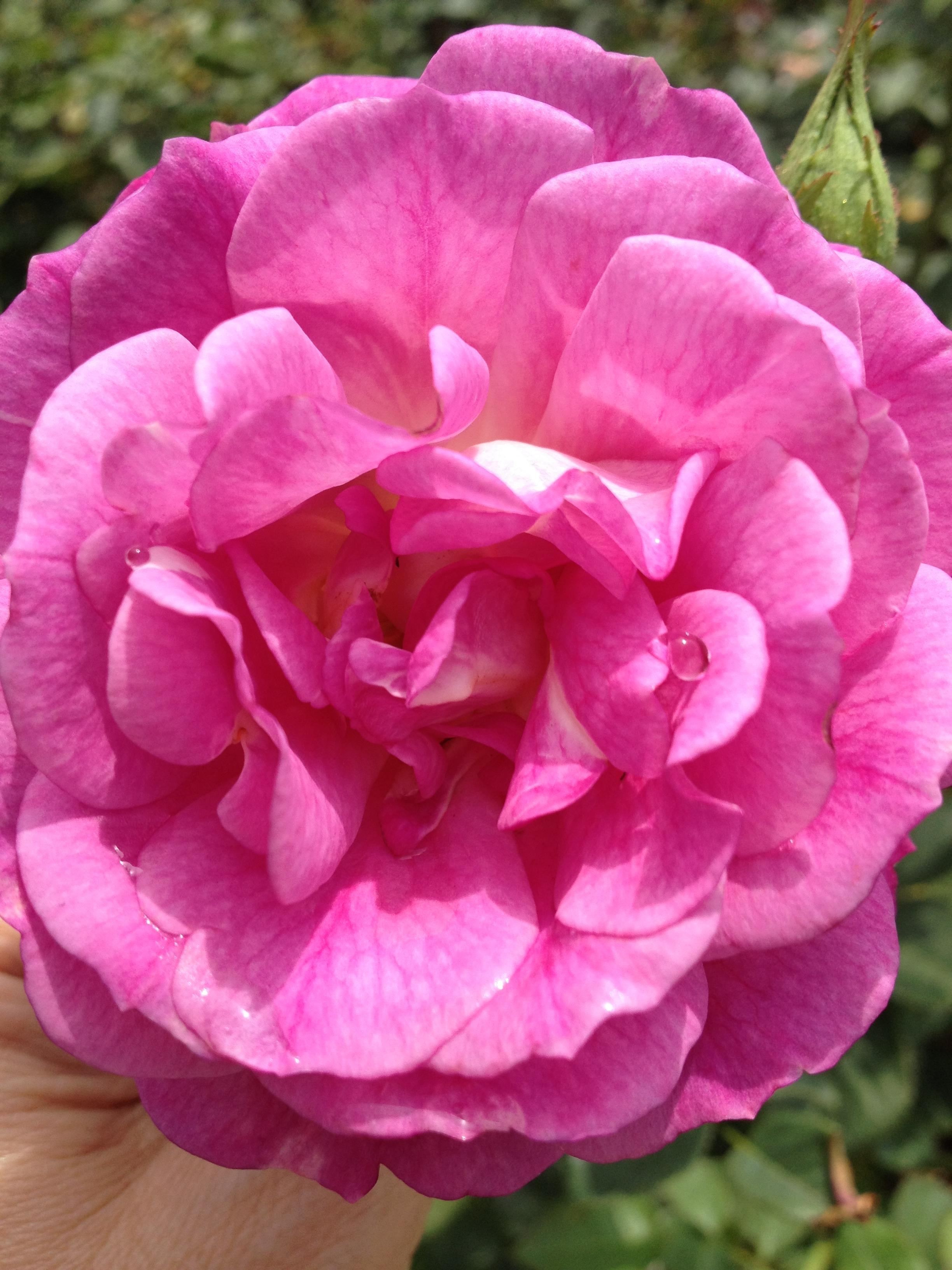 Aldik artificial flower company online wholesale aldik artificial flower company mightylinksfo