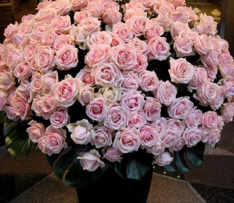 Юбилеем, открытки с миллионом роз